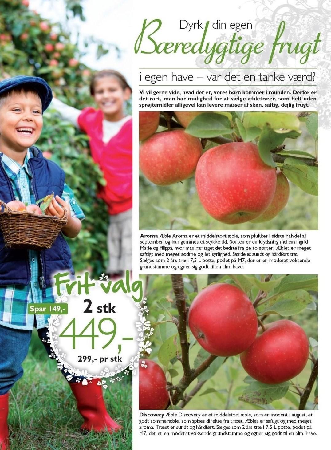 Aroma eller Discovery æbletræ 2 stk.
