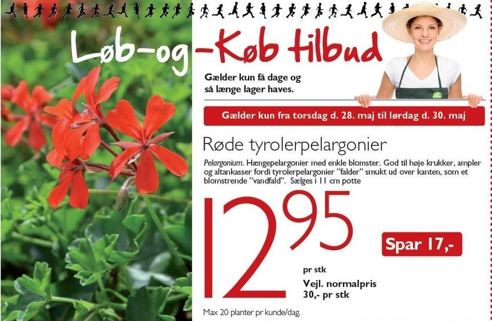 Røde tyrolerpelargonier