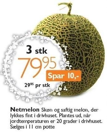 Netmelon 3 stk.