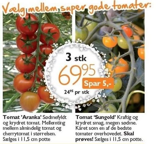 Tomatplanter 3 stk