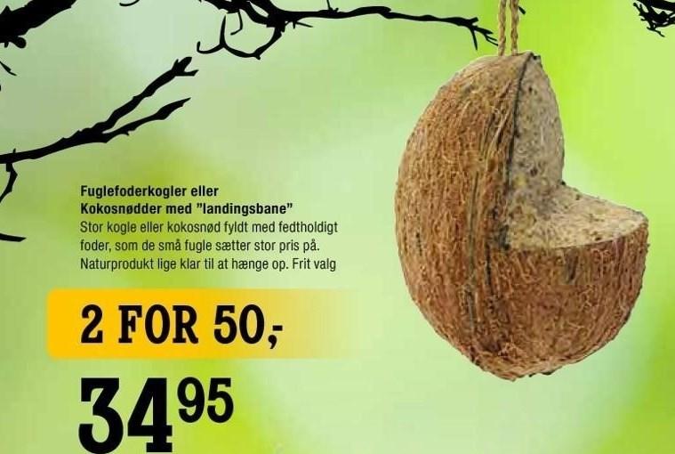 Fuglefoderkogler eller Kokosnødder med